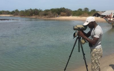 Seabird and shorebird surveys at the Kartong Bird Observatory